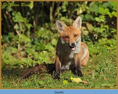 fox-99.jpg