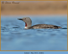 red-throated-diver- 81.jpg