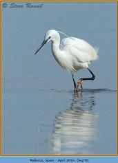 little-egret-70.jpg