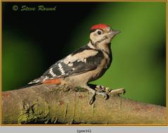 gt-s-woodpecker-16.jpg