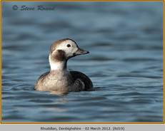 long-tailed-duck-19.jpg