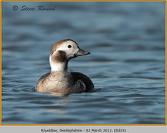 long-tailed-duck-19.jpg