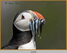puffin- 59.jpg