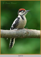 gt-s-woodpecker-13.jpg