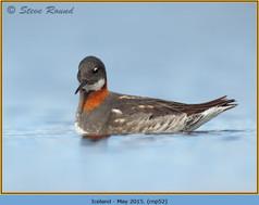 red-necked-phalarope-52.jpg
