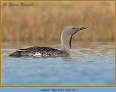 red-throated-diver-113.jpg