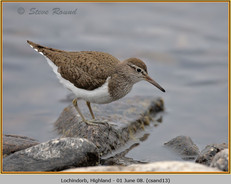 common-sandpiper-13.jpg