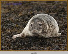 grey-seal-06.jpg