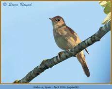 nightingale-08.jpg
