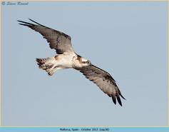 osprey-38.jpg