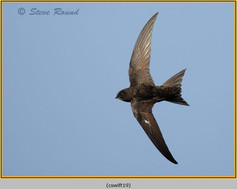 swift-19.jpg