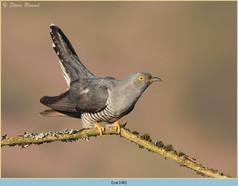 cuckoo-140.jpg