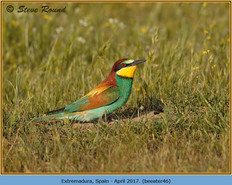 bee-eater-46.jpg