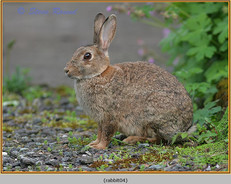 rabbit-04.jpg
