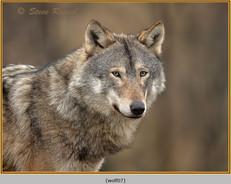 wolf-07.jpg