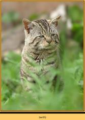 wildcat-05.jpg