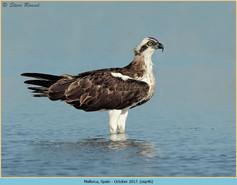 osprey-46.jpg