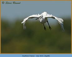 little-egret-68.jpg