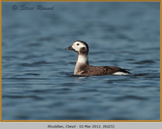 long-tailed-duck-25.jpg