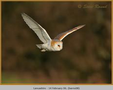 barn-owl-08.jpg