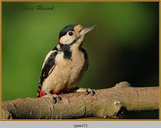gt-s-woodpecker-17.jpg