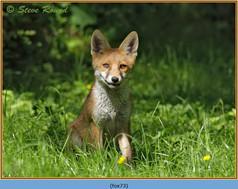 fox-73.jpg