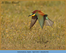 bee-eater-44.jpg