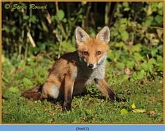 fox-97.jpg