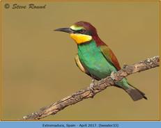 bee-eater-33.jpg