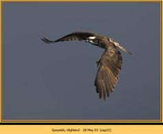 osprey-22.jpg