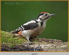 gt-s-woodpecker-41.jpg