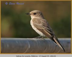 spotted-flycatcher-10.jpg