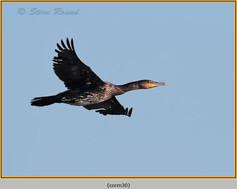 cormorant-30.jpg