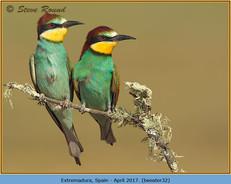 bee-eater-32.jpg
