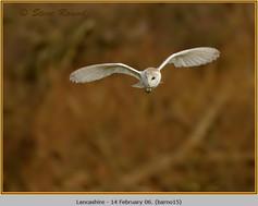 barn-owl-15.jpg