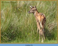 red-deer-76.jpg
