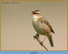 sedge-warbler-51.jpg
