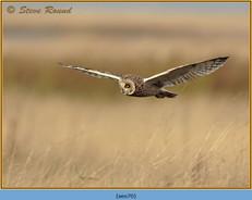 short-eared-owl-70.jpg