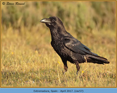 raven-57.jpg