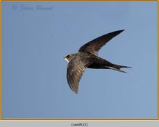 swift-22.jpg