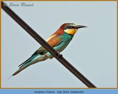 bee-eater-06.jpg