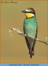 bee-eater-30.jpg