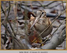 woodcock-01.jpg
