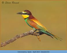 bee-eater-22.jpg