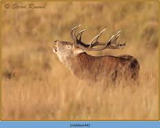 red-deer-44.jpg
