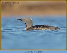 red-throated-diver- 82.jpg