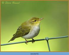 wood-warbler-70.jpg