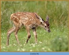 red-deer-78.jpg