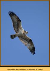 osprey-09.jpg