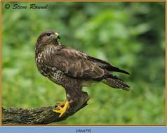 buzzard- 79.jpg